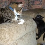 Pet behavior help lines offer free tips and advice