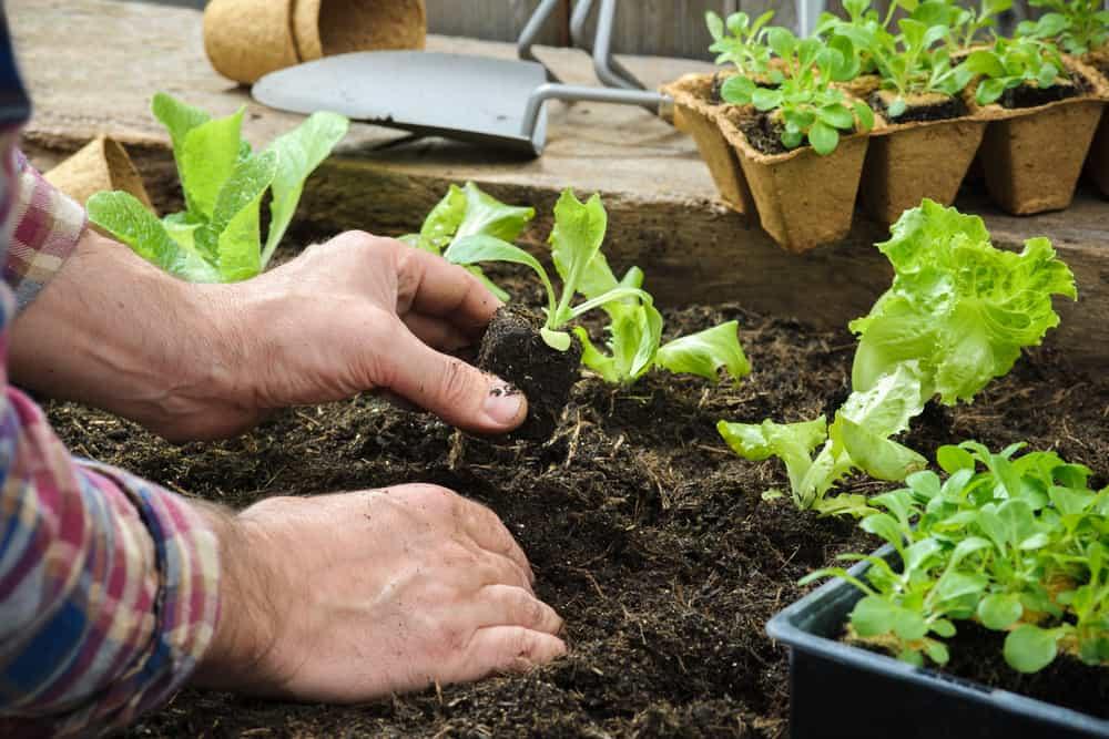 gardening plant harvest