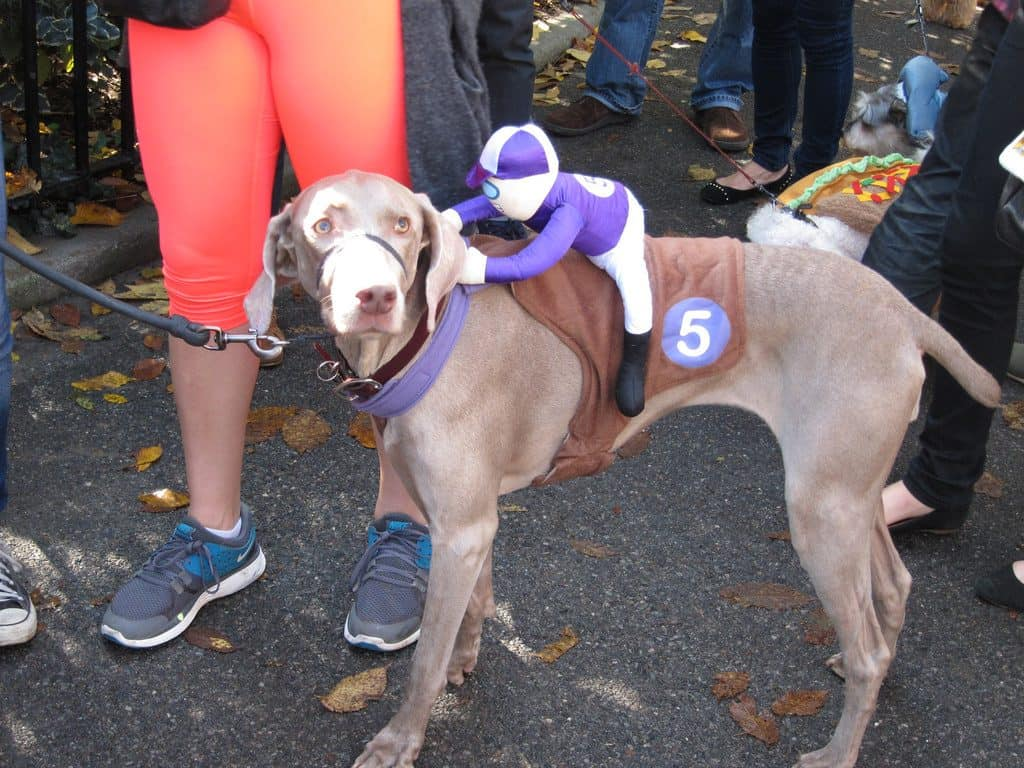 dog jockey Halloween costume