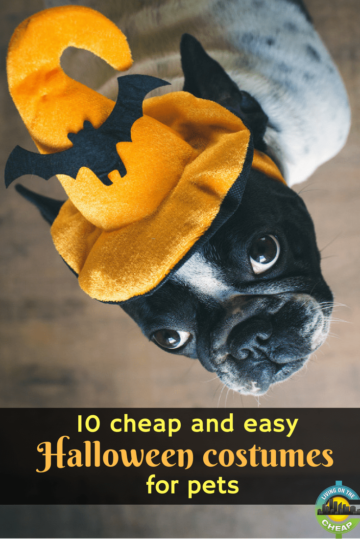 Perhaps your pet is participating in a Halloween parade. Or maybe she's strutting her fluff at a mutt masquerade. Whether it's for an event or just a fun family photo in the living room, sometimes pets allow you to dress them up. #petcostumes #frugalpet #moneysavingtips