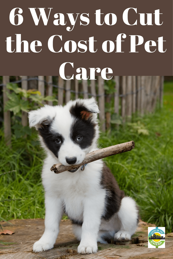Adding a pet to your home can bring in some priceless joy, but it can also have an impact on your wallet. From food and vet costs, to toys, leashes and other pet needs you can end up spending a bunch. Here are some resources that, if I'd had the presence of mind in my hurry to claim my new rescue pet, could have helped my pocketbook. #pets #moneysavingtips #newpets #petexpenses