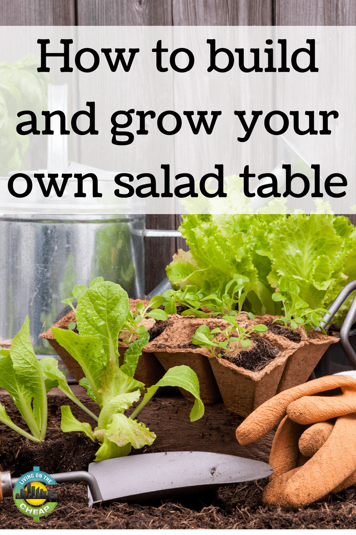 Do you love vegetables and salad, but can't plant a regular garden?  A salad table is a portable, waist-high table just deep enough to grow salad greens, herbs and other shallow-rooted plants and vegetables.