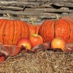 Fall apple and pumpkin recipes + DIY pumpkin puree