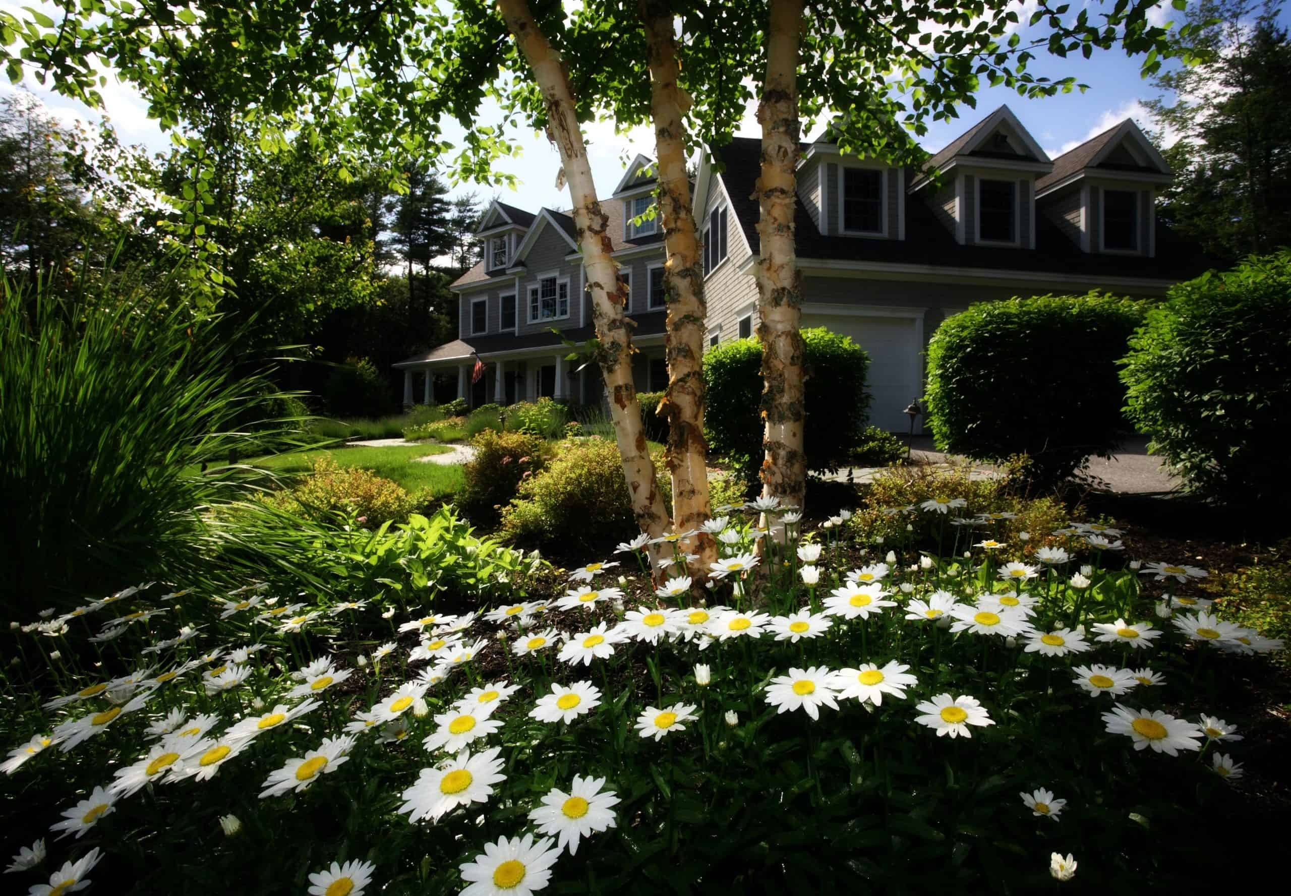 How to landscape your garden - front yard with daisies