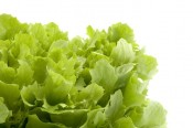 Grow lettuce and save money on salad