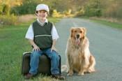 dog-travel