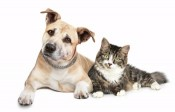 With pet, 15% off at some Red Roof Inns